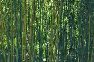 Bambus Gras