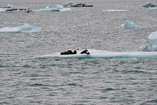 Gletscher bootstour Alaska