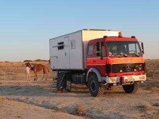 """Der Kamelhirte """"parkt"""" seine Herde direkt neben unserem LKW"""