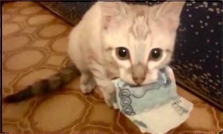 ecole du chat neuvecelle pension tarifs