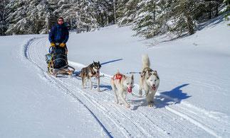 Les chiens et les guides