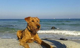 Ole am Strand von Rügen...