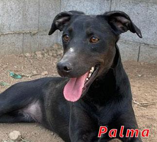 Palma - Region Lanusei - geb. ca. 04/2021