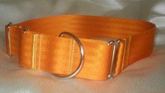 Martingale, Halsband, 4cm, Gurtband goldorange