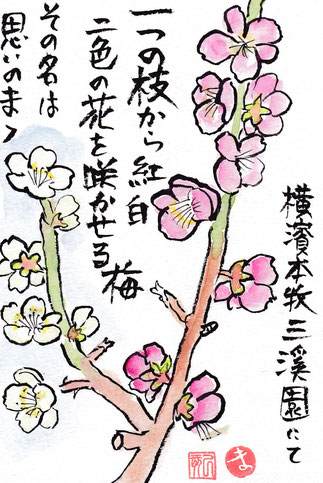 三渓園の梅