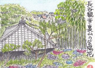 長谷観音裏山の紫陽花