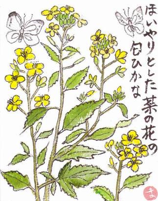 菜の花の匂い