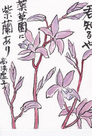 紫蘭 高浜虚子