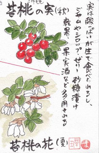 苔桃の花と実