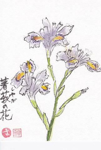 シャガ(胡蝶蘭)の花