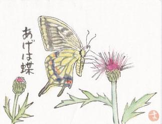 あげは蝶とアザミ2