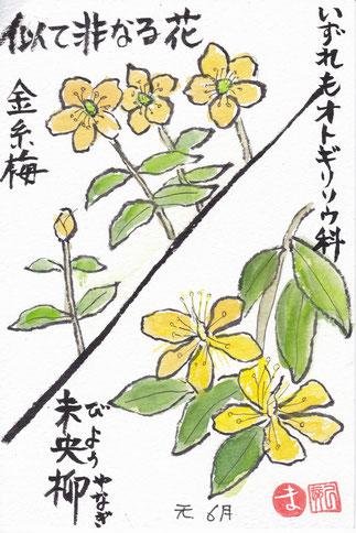 金糸梅とびよう柳