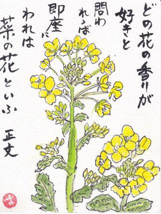 香りの菜の花