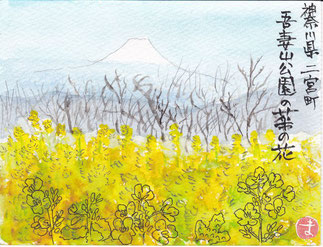 二宮吾妻山公園の富士と菜の花