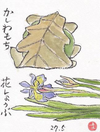 柏餅と花菖蒲