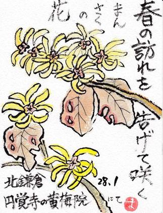 春の訪れを告げて咲く「まんさくの花」