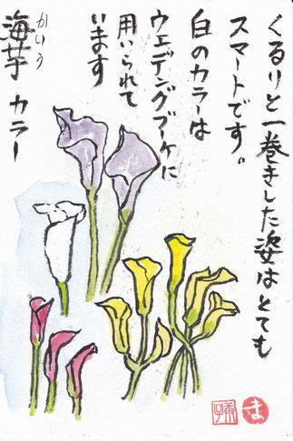 海芋(かいう)