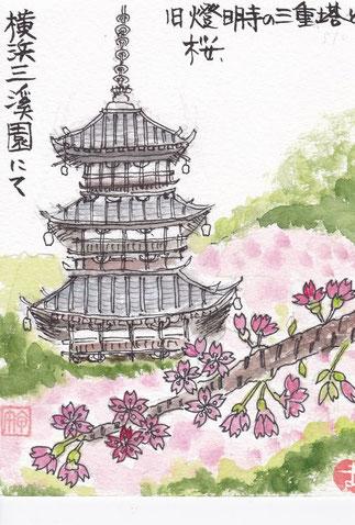 三渓園三重の塔と桜
