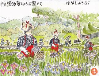 花菖蒲横須賀