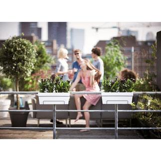 balkonbakken, balkon moestuin,groenten kweken, kruiden kweken, fruit kweken, balkon railing,  balkon ontwerp, moestuin bak, elho, urban loft, all in 1, balkon plantenbak