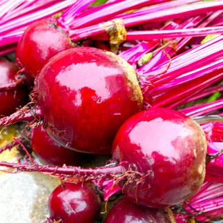bieten oogsten zelf gekweekt moestuin