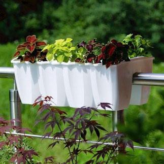 balkonbakken, balkon moestuin,groenten kweken, kruiden kweken, fruit kweken, balkon railing,  balkon ontwerp, moestuin bak, balkonbak, relingbloembak