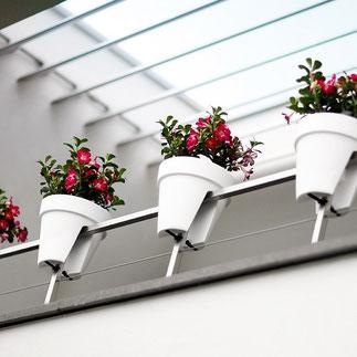 balkonbakken, balkon moestuin,groenten kweken, kruiden kweken, fruit kweken, balkon railing,  balkon ontwerp, moestuin bak, elho, flower bridge