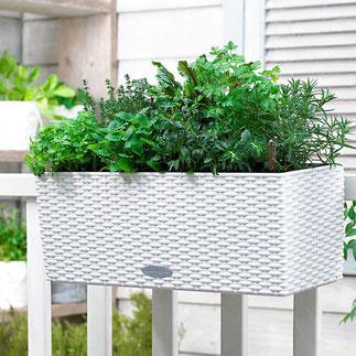 balkonbakken, balkon moestuin,groenten kweken, kruiden kweken, fruit kweken, balkon railing,  balkon ontwerp, moestuin bak, lechuza, balconera