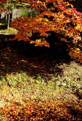 木曽川の北岸にそびえる天空の城苗木城紅葉真っ盛り木曽川の北岸にそびえる天空の城苗木城木曽川の北岸にそびえる天空の城苗木城紅葉真っ盛り美菜ガルテンふるかわ美菜ガルテンふるかわ絶対満足!グルメお値打ち和食ランチ極上