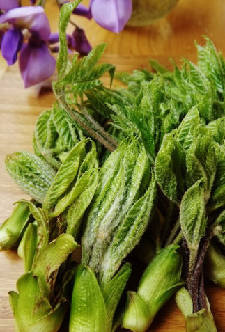 美菜ガルテンふるかわ山菜料理こしあぶらたらの芽こんてつぜんまいわらびたけのこ