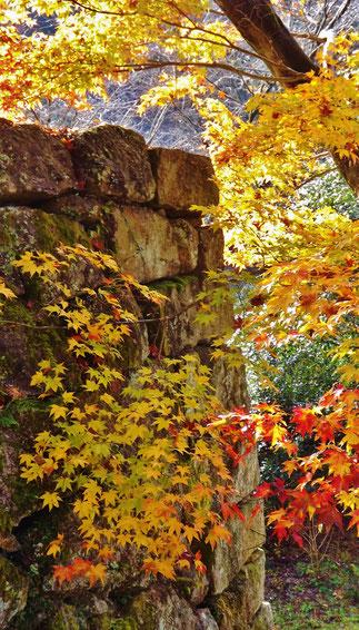 石垣と色づくもみじ。