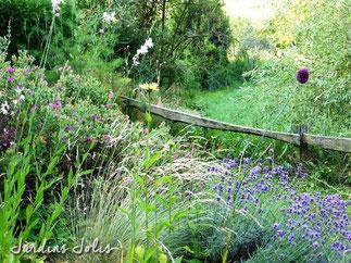 jardins jolis, lavande hidcote, fétuque bleue, allium sphaerocephalon