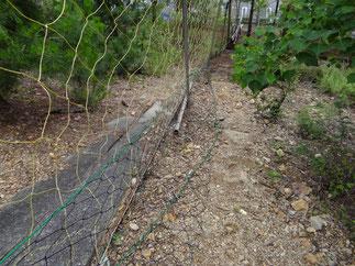 防鹿ネットにスカート取付完了、何か所か鹿にネットを破られていました。(シカとしたことは分かりませんが)