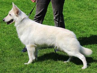 Adorable white Pearl Farina