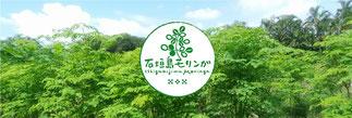 石垣島モリンガ王国