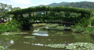モネの池「睡蓮の橋」