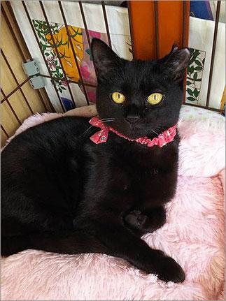 黒猫ブロン