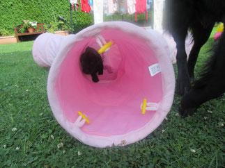 Kira ganz mutig im Katzenrascheltunnel