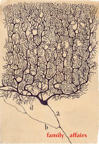 Santiago Felipe Ramón y Cajal, purkinje neuron, human cerebellum