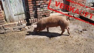Mein BioSchwein