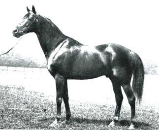 VIEUX MANOIR 1947-1981