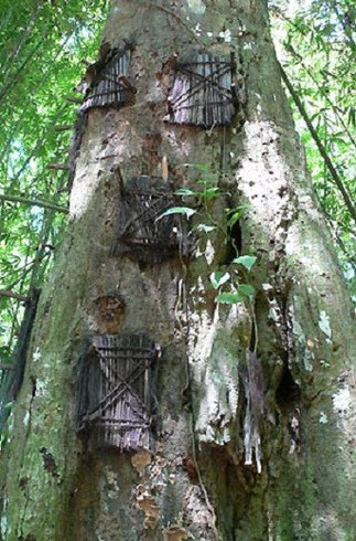 Les tombes des enfants sont creusées dans les arbres  pour qu'ils puissent grandir et parvenir au royaume des morts.