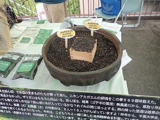 黒米量り売り 山もり1号200円 縄文土器