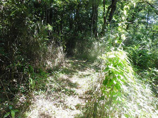 整備中の自然観察路