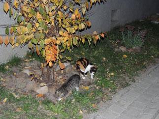 Verfolgt haben uns die Tierchen bei unserem Spaziergang an einem lauen Oktoberabend