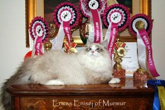 Ermes Enisej of Murmur