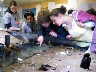 Aquarien, Mikroskopieren, den Lebensraum watt erkunden. Gerne helfen wir Euch bei der Programmgestaltung auf Hallig Hooge und arbeiten dabei eng mit der Schutzstation Wattenmeer zusammen.