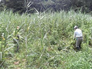 埋土種子発芽試験地の確認。
