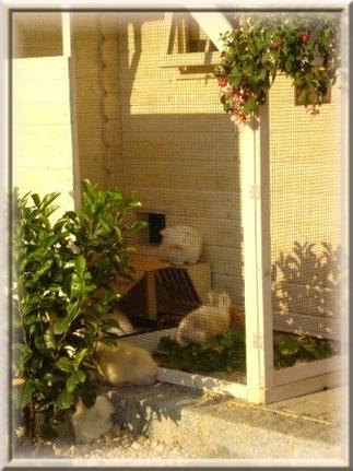 Im Sommer haben unsere Teddys die Möglichkeit rund um die Uhr in ihrem überdachten Außengehege frische Luft zu schnappen