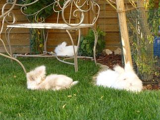auch unter der ausladenden Weide neben der Teddy-villa lädt es zum Relaxen ein